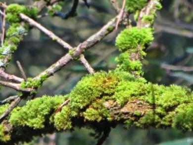 2013-10-19 11h Wald bei Hilpoltstein (011) Moos