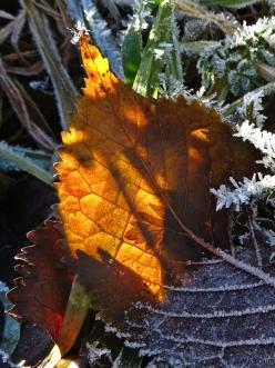 2013-11-25 LüchowSss 074 Rauifreif+Herbstblatt