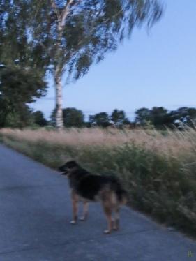 2014-06-21 bLüchow 081 Nachtspaziergang 22h40 Bongo