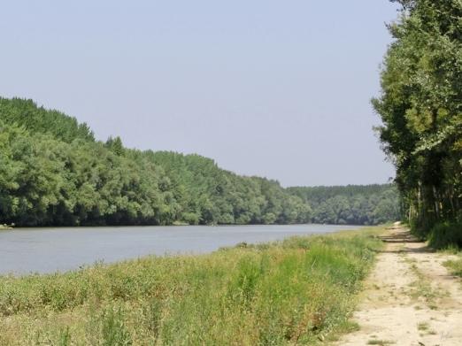 2014-08-08 Györ vormittag CIMG2983 Auwald an der Mosoni Duna