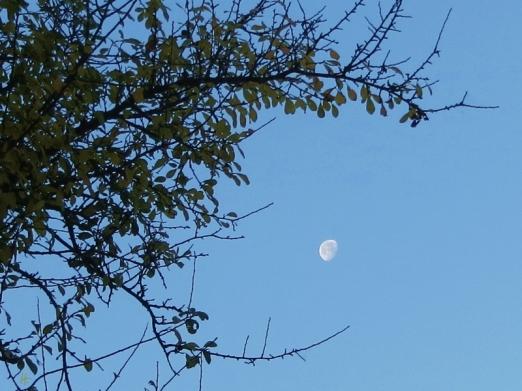 2014-11-11 bLüchow 002 Mond+Schlehenzweige 8h59