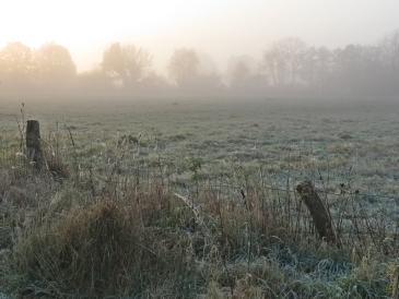 2014-11-11 bLüchow 014 Wiese+Sonnenaufgang