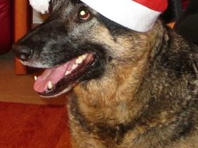 Frohe Weihnachten wünscht auch Bongo!