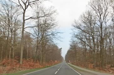 auch noch im Kreis Lüchow-Dannenberg, in der Göhrde