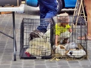 2015-08-23 3_Gent_4 Oude Beestenmarkt (6) Kind mit Tieren