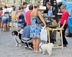 2015-08-23 3_Gent_4 Oude Beestenmarkt (7) Hunde