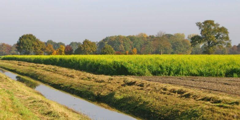 2015-11-01 bLüchow (35) am Königshorster Kanal