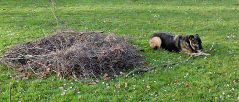 2015-12-23 LüchowSss Garten (32) Bongo+Frostschutz-Nest für Maulbeere