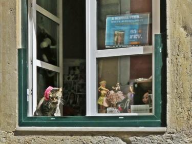 2016-03-30 Lissabon (Portugal) Tag 2-19 treppauf ins Bairro Alto (18A) Rua da Misericórdia Katze im Fenster