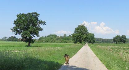 2016-06-04 bLüchow (1) Bongo