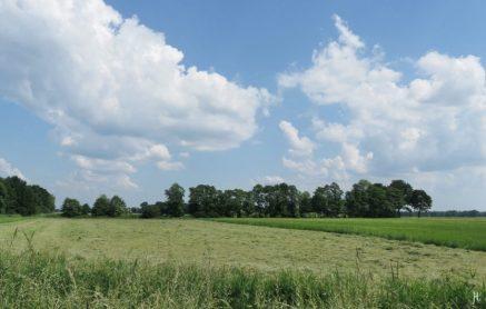 2016-06-04 bLüchow (56) Landschaft