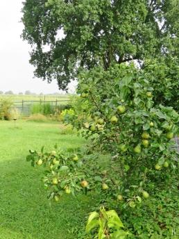 2016-07-29-luechowsss-garten-6-birnbaum