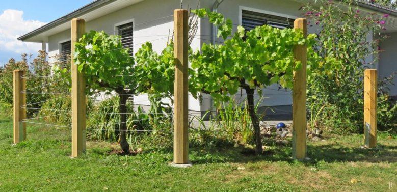 Wein im Garten | Veröffentlicht am 2016/08/21 von puzzleblume