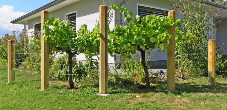 Wein im Garten   Veröffentlicht am 2016/08/21 von puzzleblume