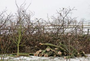 2017-01-24-luechowsss-garten-eiche-32-astwerkspatzen