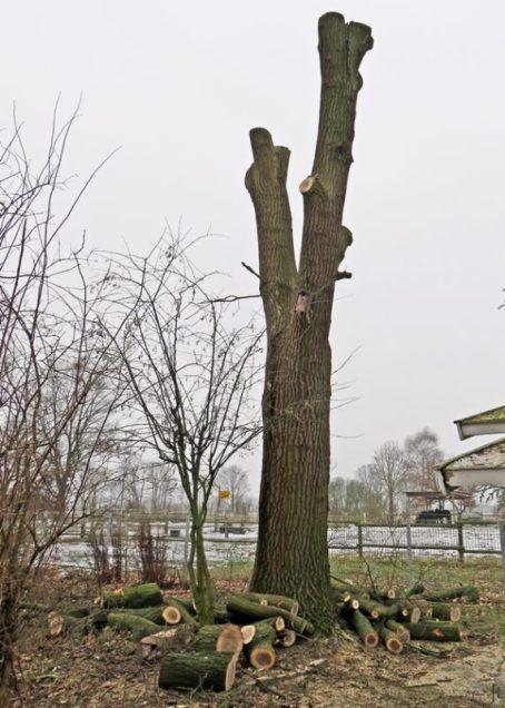 2017-01-24-luechowsss-garten-eiche-56