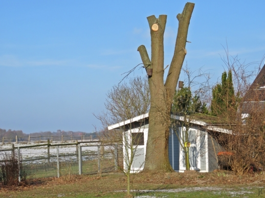 2017-01-26-luechowsss-garten-bzw-eiche-9