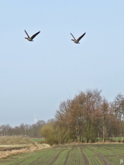 2017-03-03-bluechow-banneick-20-fliegende-graugaense
