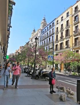 2017-04-11_17 MADRID-Urlaub (290) Calle Mayor - Stadthunde