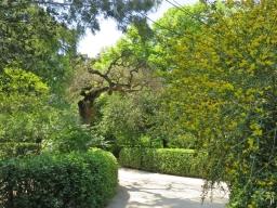 2017-04-12_8 MADRID-Urlaub (142) Plaza Murillo - Real Jardín Botánico de Madrid - Weg+Ginster