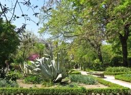 2017-04-12_8 MADRID-Urlaub (146) Real Jardín Botánico de Madrid - Agave