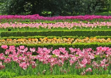 2017-04-12_8 MADRID-Urlaub (188) Real Jardín Botánico de Madrid - Tulpenbeete