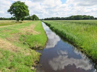 2017-07-03 bLüchowSss Königshorster Kanal (2) 2 Wochen später - nur einseitig gemäht, immerhin