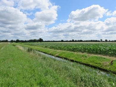 2017-07-03 bLüchowSss Königshorster Kanal (25) Lüchowseitig ungemäht, Saaße-seitig gemäht - ein guter Kompromiss