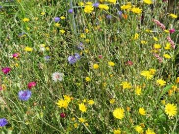 Buntes Sommerblumen-Gewusel