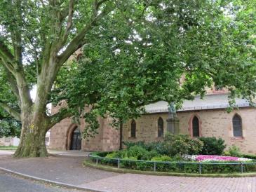 2017-07-16 Grimma (11) Ahornblättrige Platane Frauenkirche, Büste Martin Luthers v. Ernst Rietschel