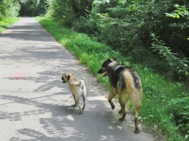 Bongo und sein kleiner Freund
