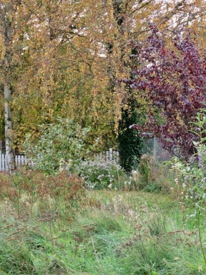 2017-10-17 LüchowSss Garten (32) über die Wiesen-Insel zu den Birken
