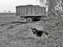 2017-11-01 LüchowSss (10sw) eingesunkener Kartoffel-Wagen