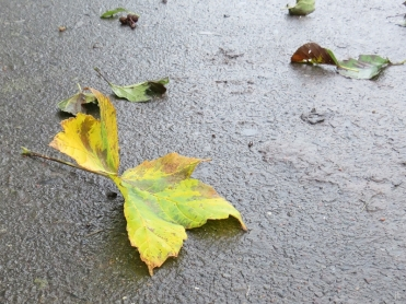 2017-11-01 LüchowSss (20) Herbstblätter auf dem Weg