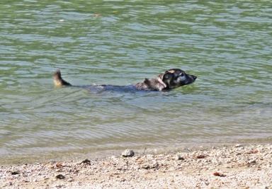 2018-10-12 Györ - Kleine Donau (6) Bongo schwimmt