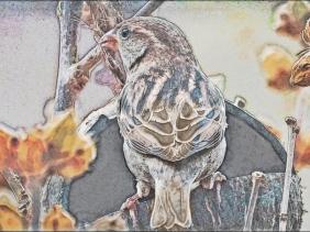 2018-11-26 LüchowSss Garten Haussperling (Passer domesticus), weiblich, vor dem Fenster (1-5 Art)