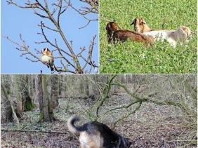 2019-01-30 LüchowSss (1x3) Distelfinken (Carduelis carduelis) + Ziegen u. Schaf + Bongo