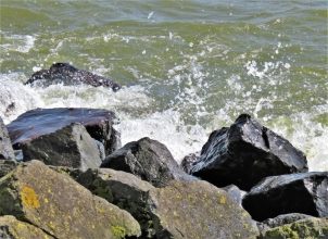 2019-04-09 NL Abschlussdeich des IJsselmeeres (13)Steinblöcke auf der Innenseite