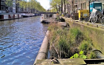 2019-04-13 NL Amsterdam Prinsengracht (14) am Hausboot-Museum 'Hendrika Maria' Prinsengracht 296 K