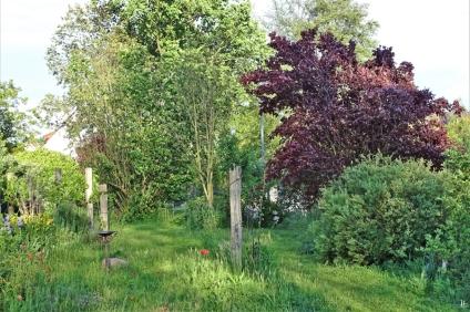 2019-05-22 LüchowSss Garten Blutpflaume (Prunus cerasifera) (5)