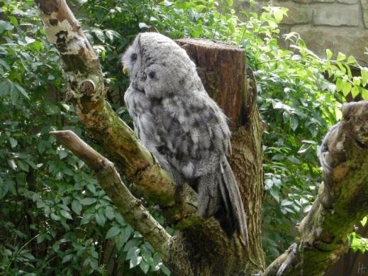2011-07-28-vogelpark-walsrode-088-uhu